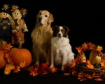 Barb Cerrito - ABBY & BACI FALL PHOTO