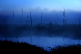 Maria Isabel Martins Vaccaro - Blue Morning